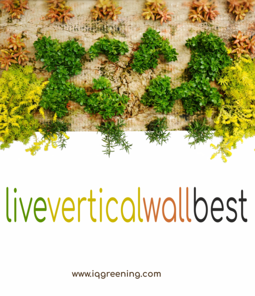 https://liveverticalwallbest.com/wp-content/uploads/2020/06/wall_new-500x580-1-500x580.png